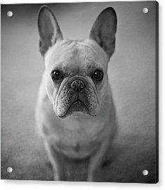 Acrylic Print featuring the photograph Olive by Lucian Capellaro