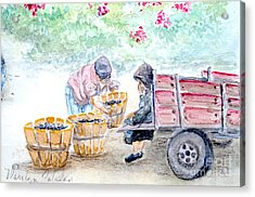Olive Pickers Acrylic Print by Marilyn Zalatan
