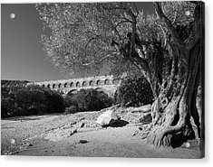 Olive Tree And Pont Du Gard, France Acrylic Print