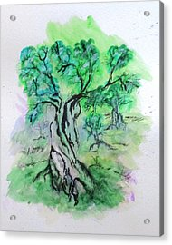 Olive Tree Grove Acrylic Print by Clyde J Kell