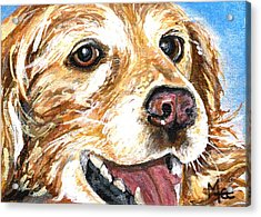 Oliver From Muttville Acrylic Print by Mary-Lee Sanders