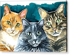 Oliver, Willow And Walter - Cat Painting Acrylic Print