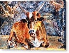 Om Beach Bull Acrylic Print by Claudio  Fiori