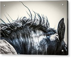 #1240 - Mortana Morgan Mare Acrylic Print