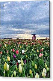 Ominous Spring Skies Acrylic Print