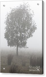 Acrylic Print featuring the photograph On A Winter's Morning by Linda Lees