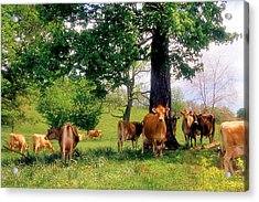On Emerald Pastures Acrylic Print by Jan Amiss Photography