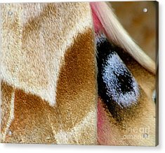 On Fragile Moth's Wings Acrylic Print