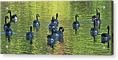 On Golden Pond Acrylic Print by DigiArt Diaries by Vicky B Fuller