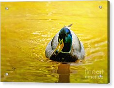 On Golden Pond Acrylic Print by Lois Bryan