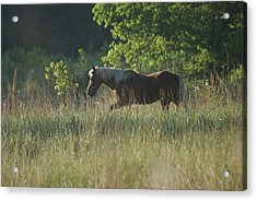 Acrylic Print featuring the photograph On My Own by Heidi Poulin