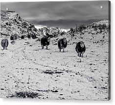 Acrylic Print featuring the photograph On Our Way by Keith Elliott