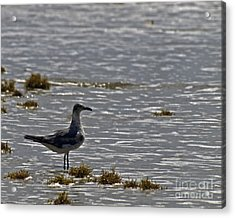 Acrylic Print featuring the photograph On The Beach by Ken Frischkorn