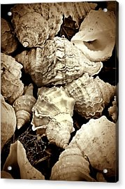 On The Beach - Shells In Sepia Acrylic Print