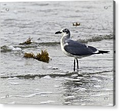 Acrylic Print featuring the photograph On The Beach Two by Ken Frischkorn