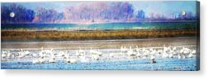 On The Delta Panorama Acrylic Print by Terry Davis