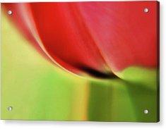 Tulip's  Edge Acrylic Print by Elaine Manley