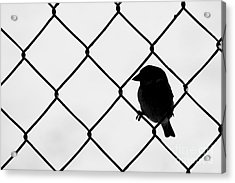 On The Fence Acrylic Print by Afrodita Ellerman