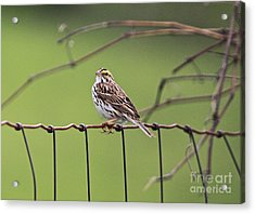 On The Fence Acrylic Print by Robert Pearson