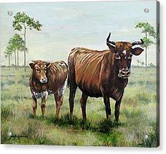 On The Florida Prairie Cracker Cattle Acrylic Print