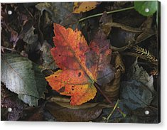 On The Forest Floor Acrylic Print