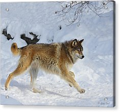 On The Hunt Acrylic Print by Gerry Sibell
