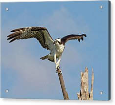 Acrylic Print featuring the photograph On The Lookout by Robert Pilkington