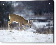 On The Move Acrylic Print