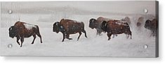 On The Move Acrylic Print by Tammy  Taylor