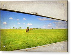 On The Other Side Acrylic Print by Darren Fisher
