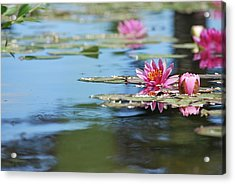 Acrylic Print featuring the photograph On The Pond by Amee Cave