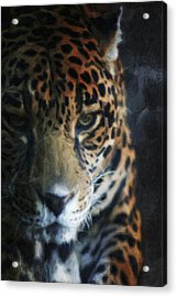 On The Prowl Acrylic Print by Trish Tritz