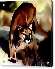 On The Prowl Acrylic Print by Vic Weiford
