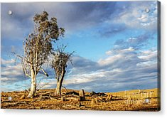 On The Road To Cooma Acrylic Print