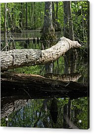 On The Swamp Acrylic Print by Alan Raasch