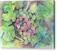 On The Vine Acrylic Print by Arline Wagner