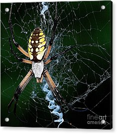 On The Web Acrylic Print by Mickey Harkins
