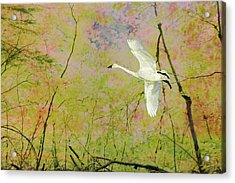 On The Wing Acrylic Print