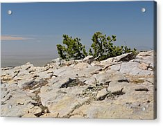 On Top Of Sandia Mountain Acrylic Print