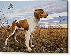 On Watch - Brittany Spaniel Acrylic Print