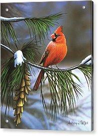 On Watch - Cardinal Acrylic Print