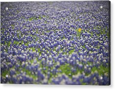 One Acrylic Print by Aaron Bedell