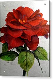 One Beautiful Rose Acrylic Print