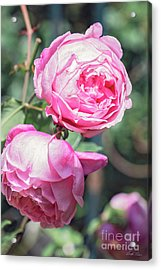 Acrylic Print featuring the photograph One Bold, One Bashful by Linda Lees
