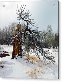 Acrylic Print featuring the photograph One Branch Left by Shane Bechler