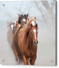 One By One Acrylic Print