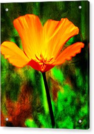 One California Poppy Acrylic Print by Fred Baird