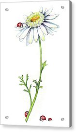 Acrylic Print featuring the painting One Daisy And Four Ladybugs by Heidi Kriel
