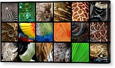 One Day At The Zoo Ll Acrylic Print