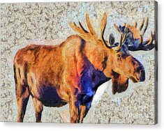 Acrylic Print featuring the painting One Handsome Moose by Elaine Ossipov